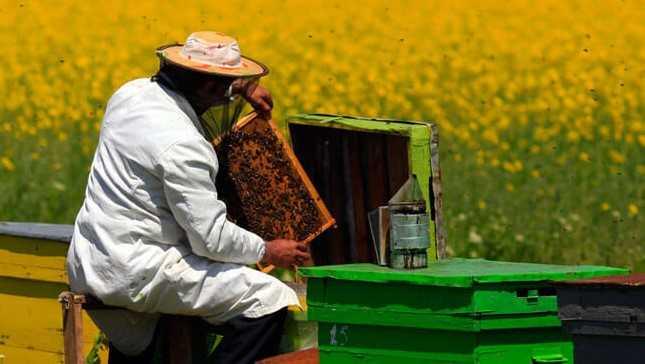 Arıcılık - Arıcılık Kredisi ve Devlet Destekleri 2019 Şartları