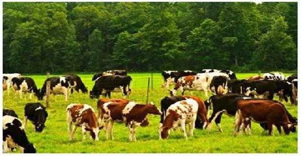 Hayvancılık destekleri