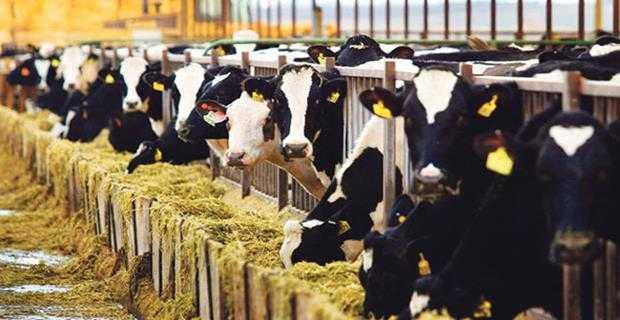 Devlet destekli hayvancılık kredileri