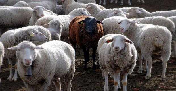 Hayvancılık destek projeleri