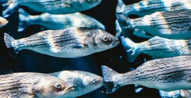 Su Ürünleri Besiciliği İçin Verilen Destekler