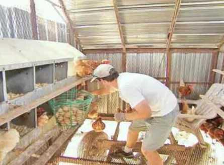 yumurta ve tavuk yetiştiriciliğinde bilinmesi gerekenler