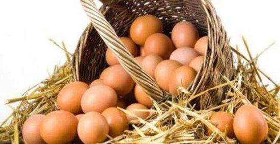 Toptan Köy Yumurtası Satın Alan Firmalar
