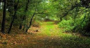 Orman ve Su İşleri Bakanlığı Hibe ve Teşvikleri 2021