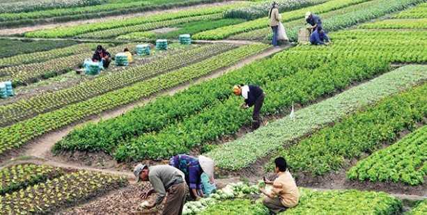Tarımsal projelere destek