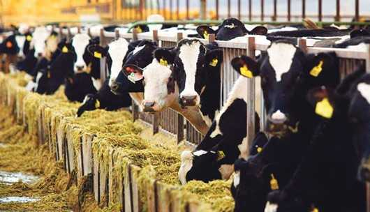 hayvancılık kredisi 2018 - Tarım Kredi Kooperatifi Hayvan Kredisi 2019 Şartları