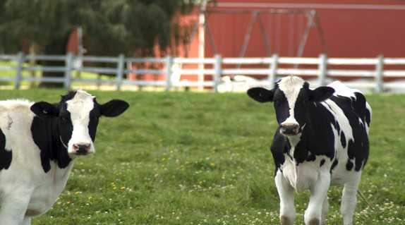 hayvan-çiftliği