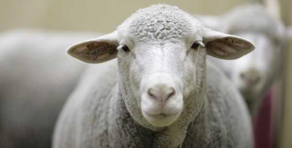 Ziraat Bankası Hayvancılık Kredisi Şartları